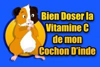 Quelle dose de vitamine c pour un cochon d'Inde ?