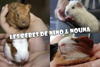Les bébés de Nino et Nouna.
